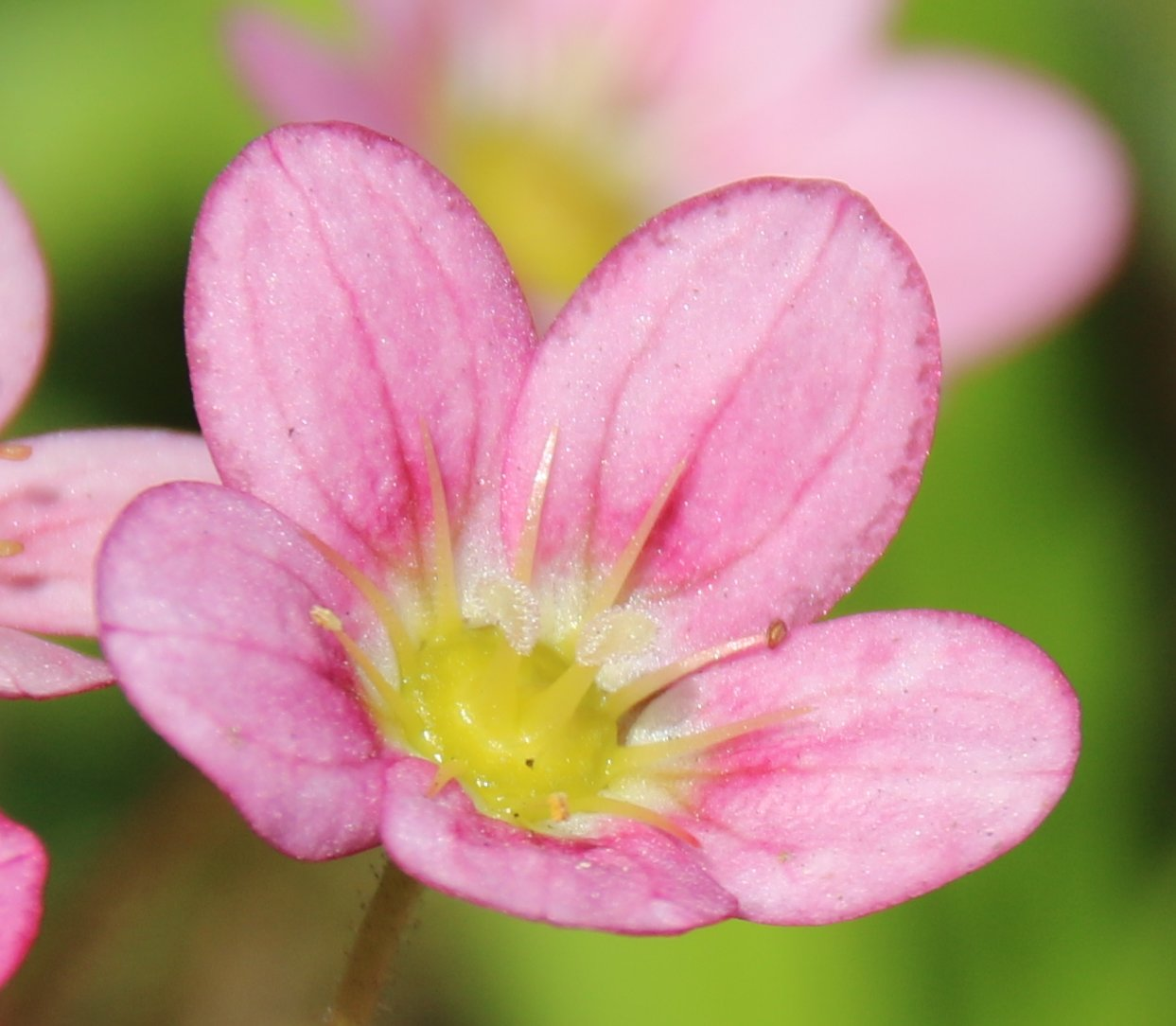 Image of A Flower Called Eric...